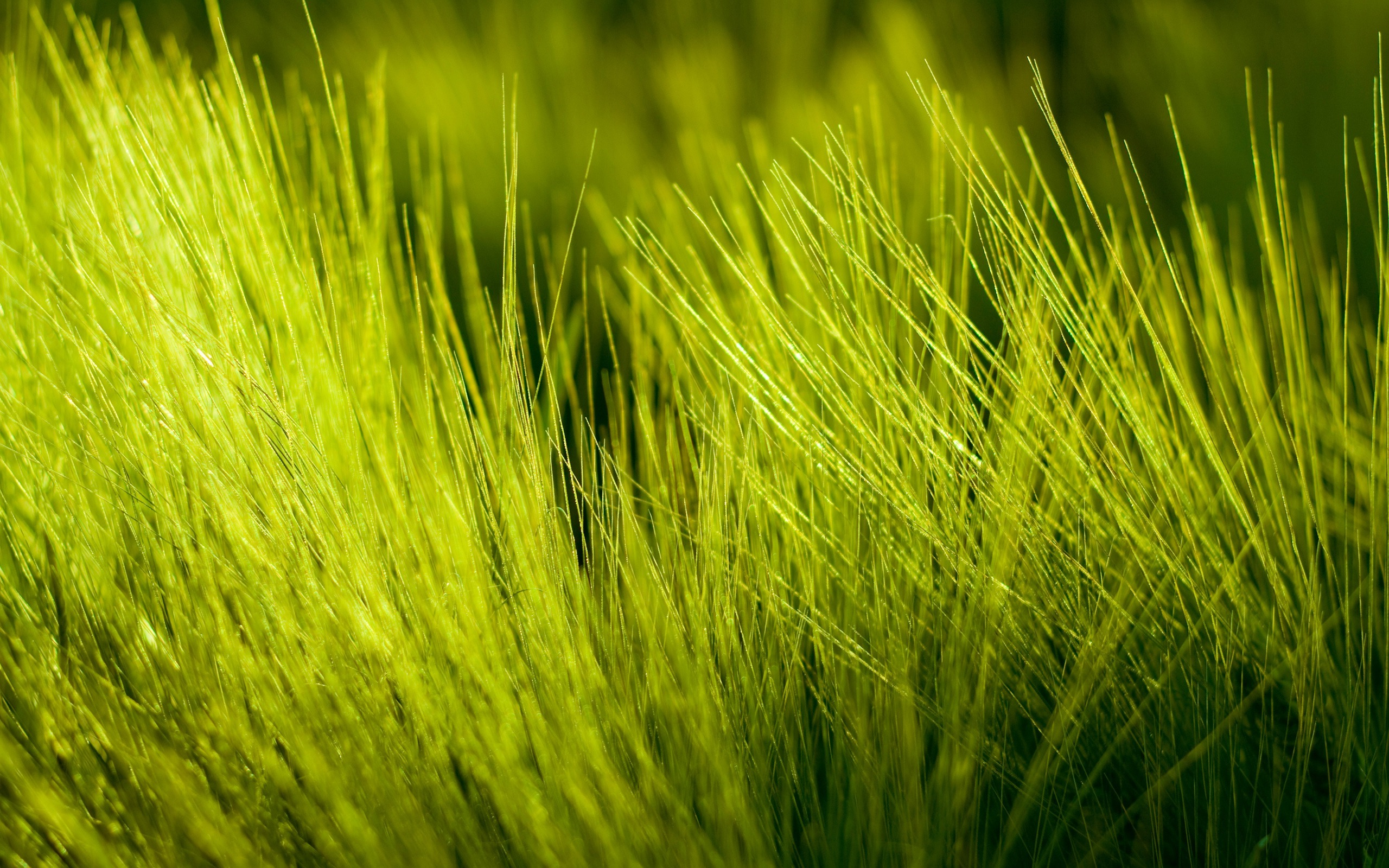 beautiful-hd-wallpaper-with-green-grass